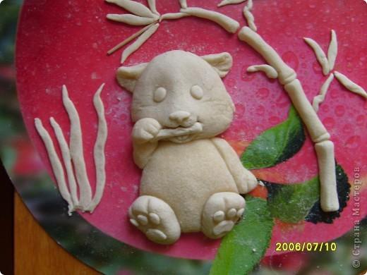 Детеныш панды фото 2