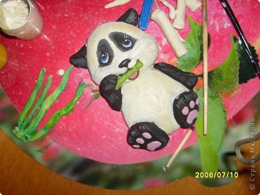 Детеныш панды фото 3