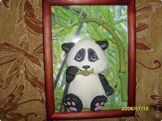 Детеныш панды фото 1