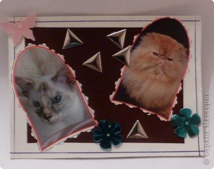 "АТС""Жили-были два кота,восемь лапок,два хвоста"" фото 6"