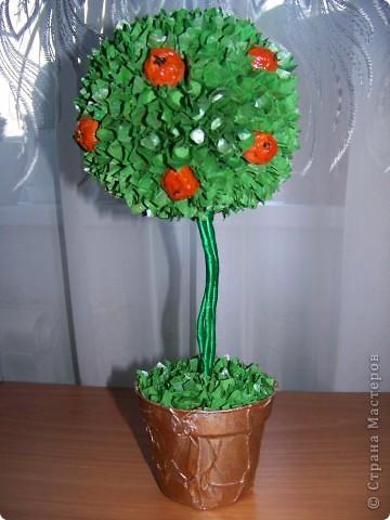 Ура!!! Вот и у меня выросло апельсиновое дерево!   фото 1