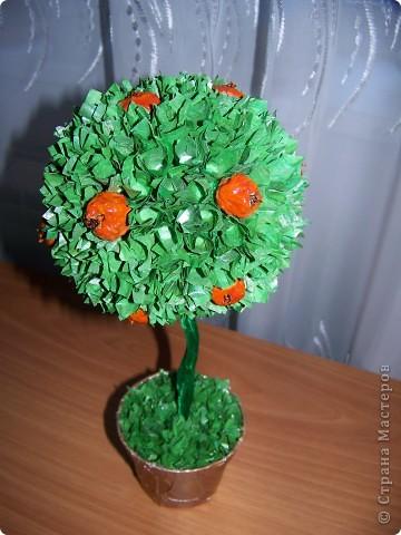 Ура!!! Вот и у меня выросло апельсиновое дерево!   фото 2