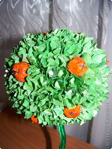 Ура!!! Вот и у меня выросло апельсиновое дерево!   фото 5