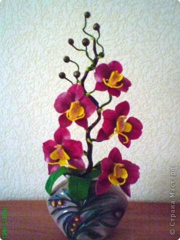 Орхидея Фаленопсис фото 1
