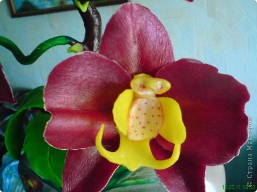 Орхидея Фаленопсис фото 7