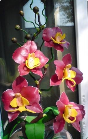 Орхидея Фаленопсис фото 3