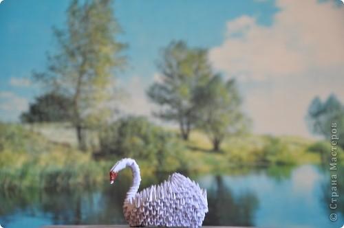 Черный лебедь ( самоклейка +ксероксная бумага, фантики) фото 5