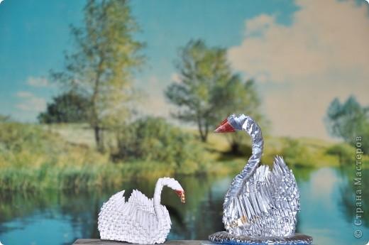 Черный лебедь ( самоклейка +ксероксная бумага, фантики) фото 6