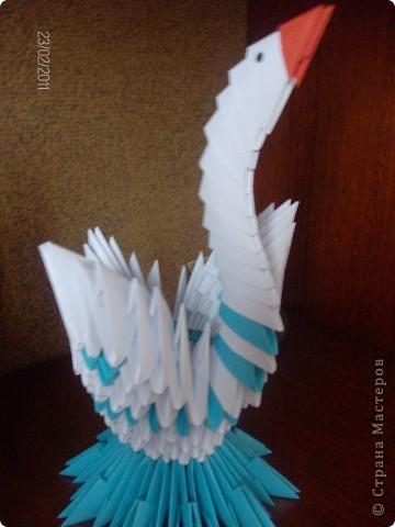 Жар птица фото 2