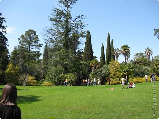 """Парк """"Дендрарий"""" в городе Сочи Это """"нижняя"""" часть парка где созданы пруды для обитания водоплавающей птицы и животных. Черный лебедь фото 9"""