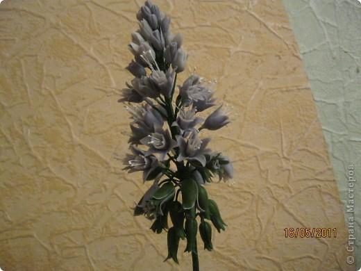 Просто цветок фото 1