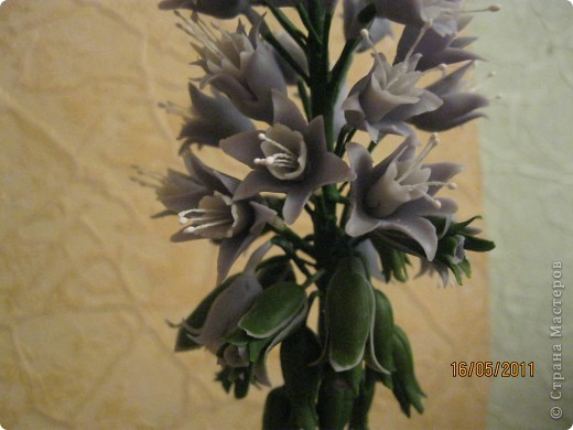 Просто цветок фото 2