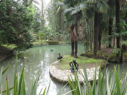 """Парк """"Дендрарий"""" в городе Сочи Это """"нижняя"""" часть парка где созданы пруды для обитания водоплавающей птицы и животных. Черный лебедь фото 1"""