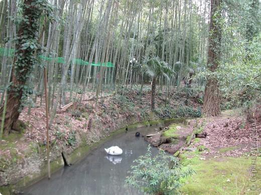 """Парк """"Дендрарий"""" в городе Сочи Это """"нижняя"""" часть парка где созданы пруды для обитания водоплавающей птицы и животных. Черный лебедь фото 4"""