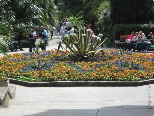 """Парк """"Дендрарий"""" в городе Сочи Это """"нижняя"""" часть парка где созданы пруды для обитания водоплавающей птицы и животных. Черный лебедь фото 20"""