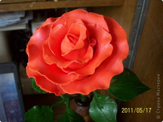 Моя первая роза из холодного фарфора фото 1