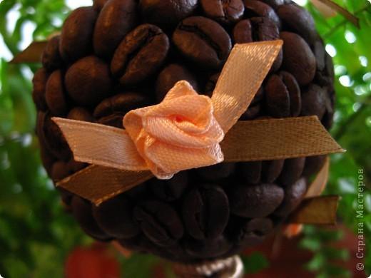 Ещё одно кофейное деревце я вырастила в подарок очень хорошему человеку - крестной моего младшего сына. Она большая любительница кофе, надеюсь подарок оценит. А мое первое дерево можно посмотреть здесь http://stranamasterov.ru/node/155462 фото 4