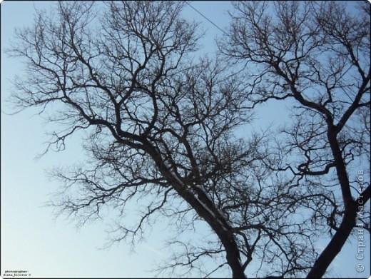 Дерево) фото 1