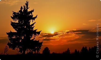 Красный закат. Ель. фото 1