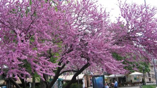 Одесса  ... в городском саду на Дерибасовской фото 2