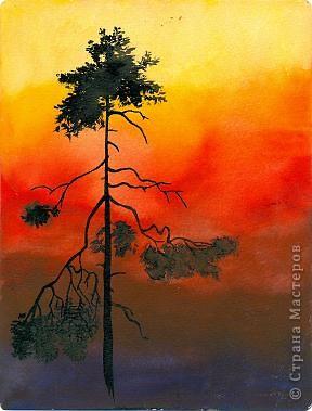 Красный закат. Ель. фото 2