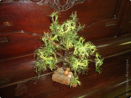 Наше дерево фото 1
