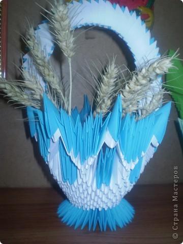 цветущий кактус фото 8