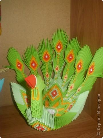 цветущий кактус фото 7