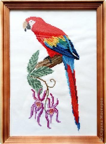 Мудрый попугай Нитки