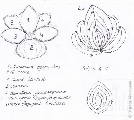 """Орхидейка """"Вырви глаз"""" фото 3"""