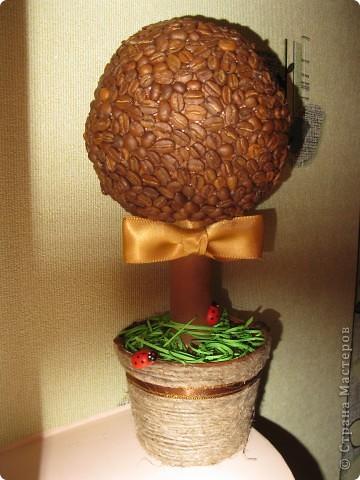 Примите и мое кофейное деревце =) фото 2