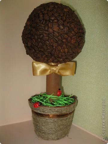 Примите и мое кофейное деревце =) фото 1