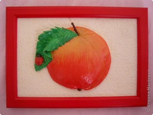 Яблоки. фото 5