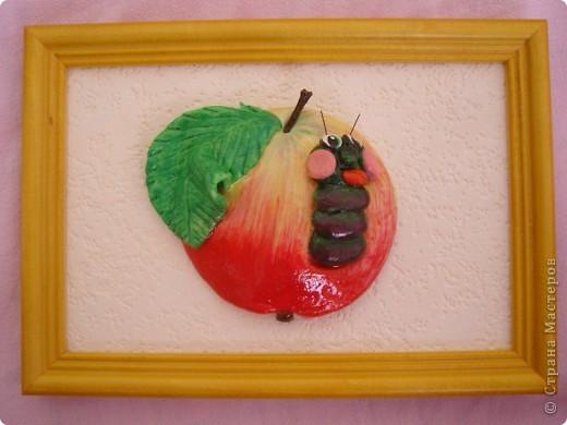 Яблоки. фото 3