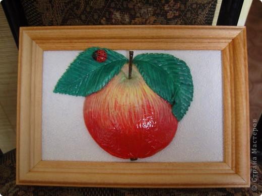 Яблоки. фото 1