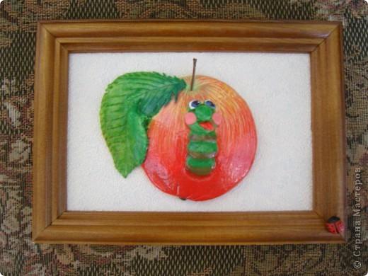 Яблоки. фото 4