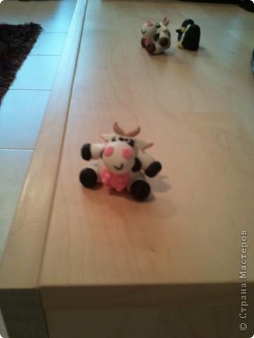 Коровки фото 2