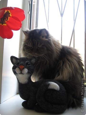 Кот Василий фото 8