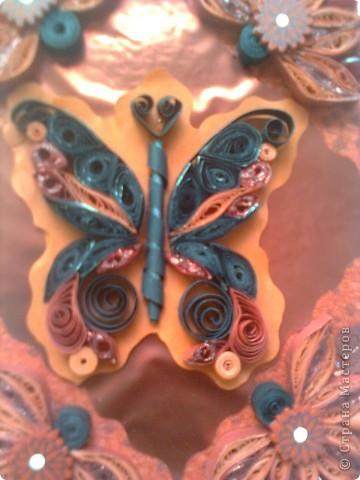 пеперуда в черено и черно фото 3