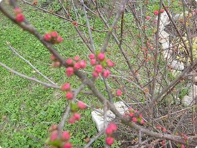 Что-то долго к нам нынче весна добирается. Где это она потерялась... Может поискать, поторопить? Решено, идем за весной. Благо, далеко не надо топать- 10 минут и мы с детьми на реке Бира. Лес еще голый, вода студеная... брррр фото 17