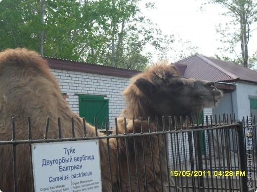 У нас в городе есть зоопарк или как раньше говорили станция юных натуралистов. Животных не много. фото 3