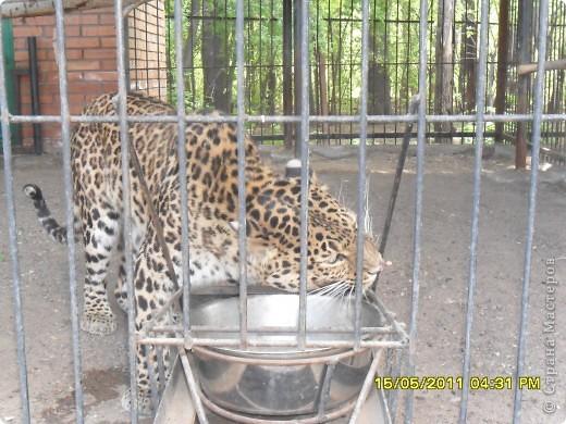 У нас в городе есть зоопарк или как раньше говорили станция юных натуралистов. Животных не много. фото 4