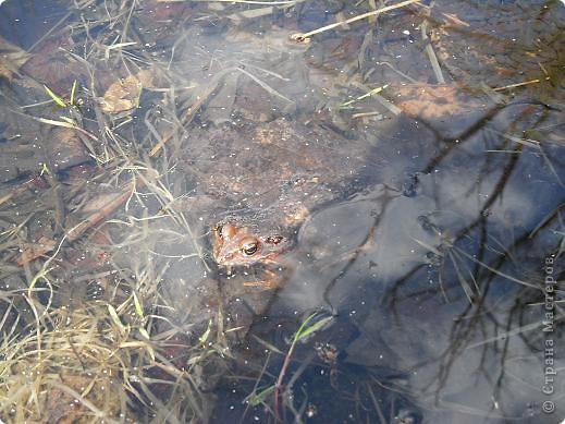 Что-то долго к нам нынче весна добирается. Где это она потерялась... Может поискать, поторопить? Решено, идем за весной. Благо, далеко не надо топать- 10 минут и мы с детьми на реке Бира. Лес еще голый, вода студеная... брррр фото 13