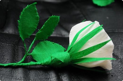 Белые Розы  фото 4