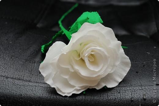 Белые Розы  фото 5