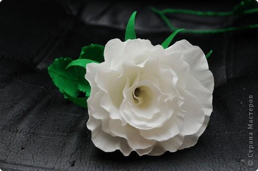 Белые Розы  фото 7