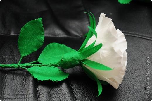 Белые Розы  фото 8