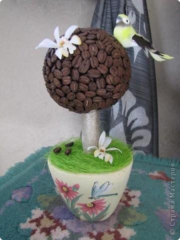 Мое первое кофейное дерево!   фото 1
