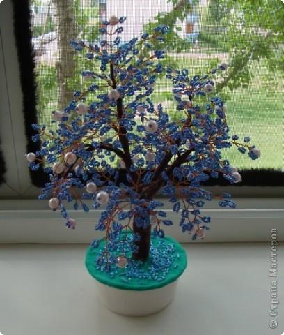 Первое дерево. фото 1