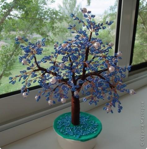 Первое дерево. фото 2
